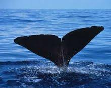 whale_behav