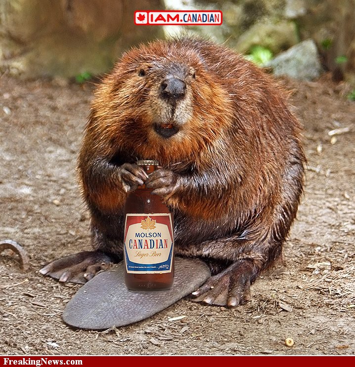http://wild-facts.com/wp-content/uploads/2010/06/Canadian-Beaver-68138.jpg