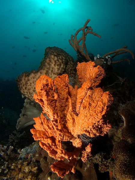 sponges in ocean. Sponges