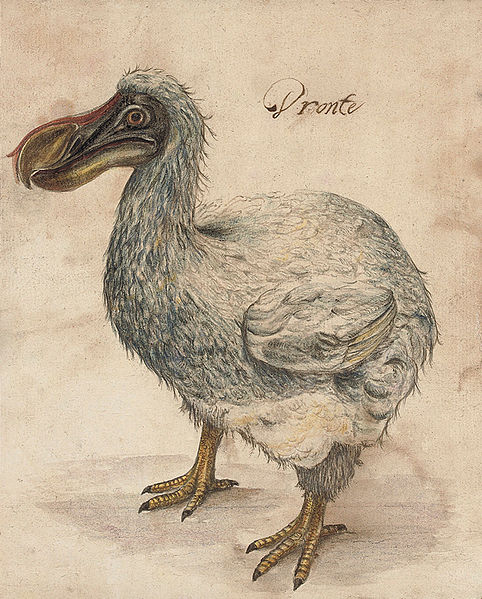 draw dodo bird