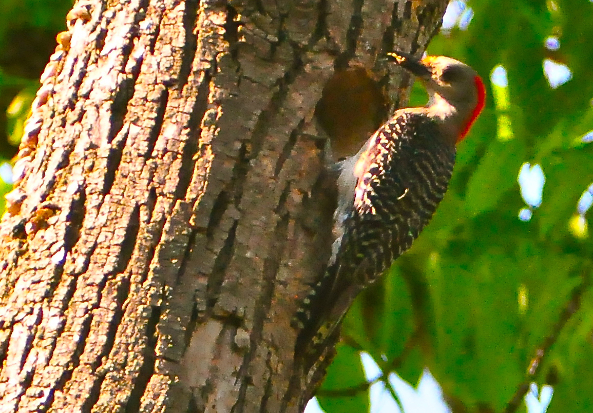 11 Bizarre Facts About Woodpeckers